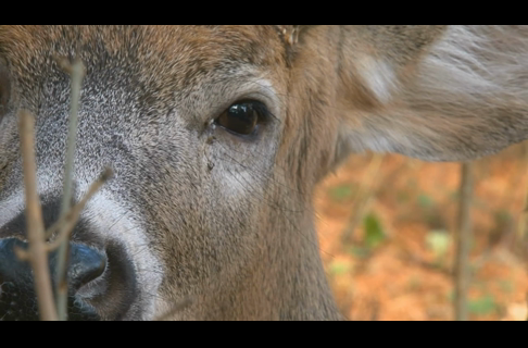 3 Tips to Use a Deer's Vision to Be a Better Hunter