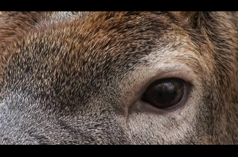 Understand a Deer's Vision to Kill More Bucks