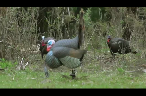 Calling Basics Every Turkey Hunter Should Know