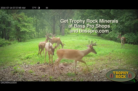 2 Key Reasons to Feed Your Deer Herd Minerals