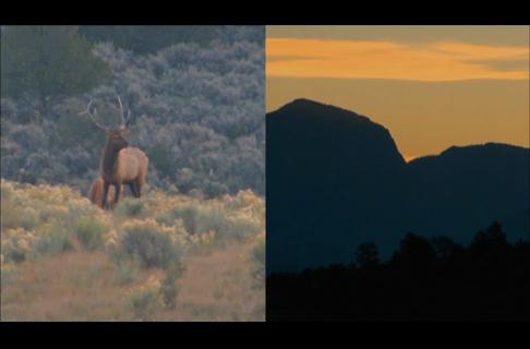 Borrowed Rifles and Bull Elk