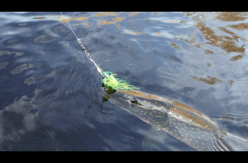 Trolling Spinner Baits for Pike