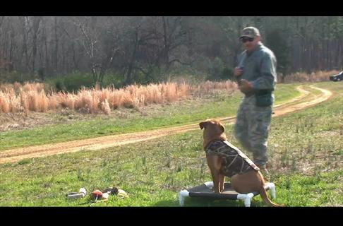Gun Dog Steadiness Drills