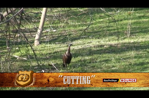 Learn the Cut Call to Locate and Seduce Wild Turkeys