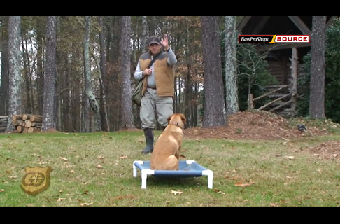 Hunting Dog Training: Place Board Drill