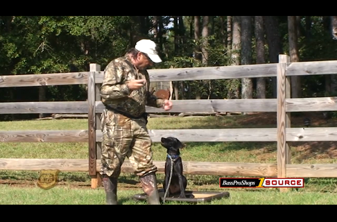 Hunting Dog Training: Set the Foundation for Your Pup