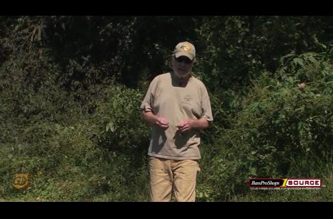 J Wayne Fears: Managing Habitat With Persimmon Tree