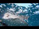 Fish Bytes: NJ SHARK ADVENTURES