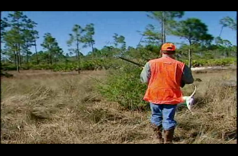 Florida Quail Hunt with Jerry Martin and Water Parrot