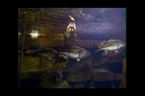 Learn About Giant Fish Aquariums