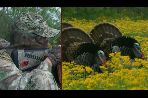 Wide Open Turkey Hunting in Texas