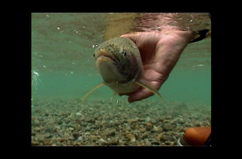 How to Catch & Release Trout With Care