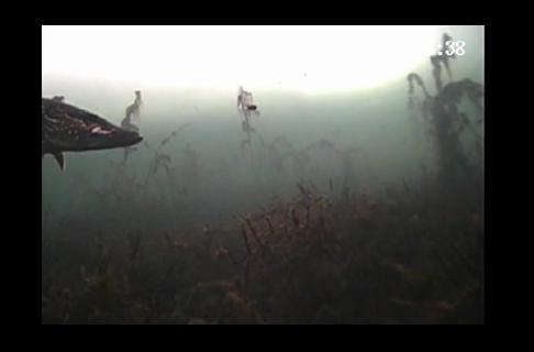Pike on the Aqua-Vu 740c