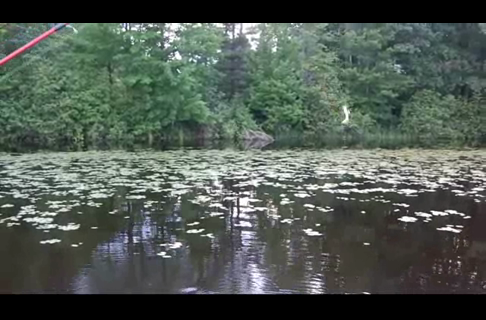 Pitching Jigs For Crappies