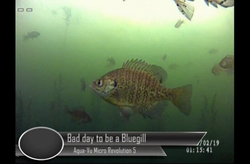 Bad Day To Be a Bluegill