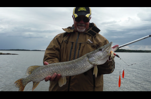 Spinnerbaits for Shallow Pike and Muskies