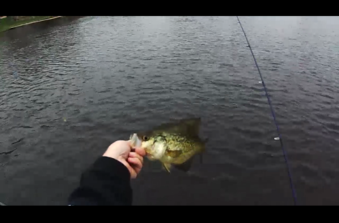 Pitching Jigs for Crappies and Gamefish