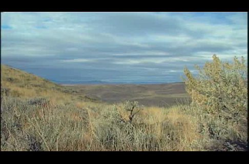 Oregon Quail Hunt with Allen Treadwell