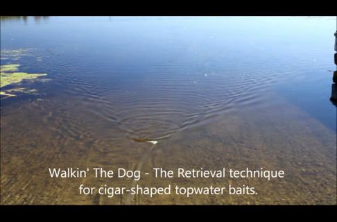 Fishing:Tips to Walk the Dog