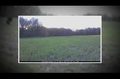 Time Lapse vs. Motion Trail Cameras