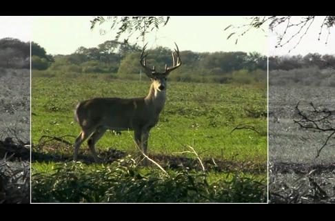 The Most Effective Bullet Design for Deer Hunting