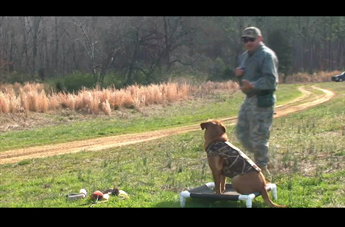 Gun Dog Steadiness Drills