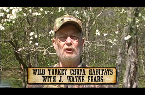 The Importance of Planting Chufa for Wild Turkey