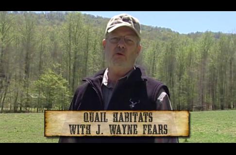 Quail Habitats with J Wayne Fears
