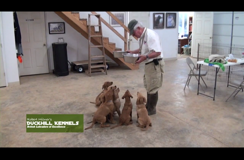 Gundog Training Introduction with Rick Flippen