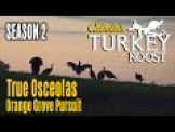 Hunting Osceola's: Cabela's Turkey Roost