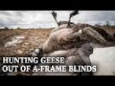 Hunting Geese From A-Frame Blinds